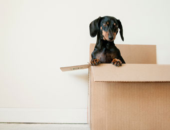 Moving to A New House! The Dos and Don'ts!